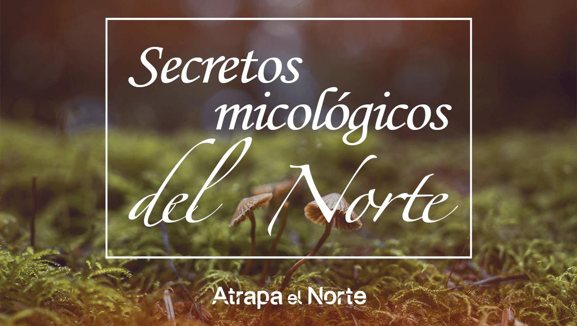 https://www.atrapaelnorte.com/wp-content/uploads/2020/11/recoleccion-micologica-otono-excursiones-naturaleza-coger-setas-y-hongos-navarra-pais-vasco-norte-de-espana-1134x640.png